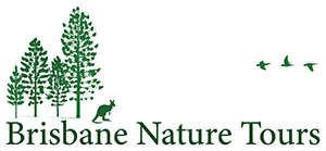 Brisbane Nature Tours