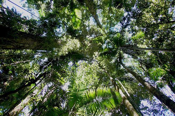Maiala canopy